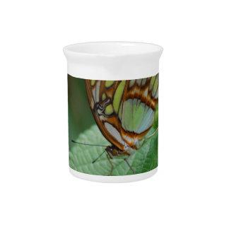 Mariposa fresca jarras