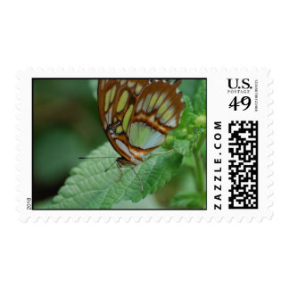 Mariposa fresca sellos