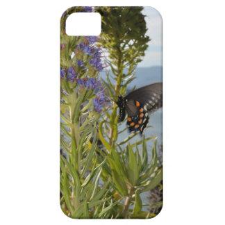 Mariposa Funda Para iPhone SE/5/5s
