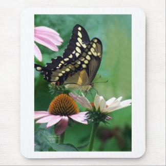 Mariposa gigante de Swallowtail en las flores Alfombrillas De Ratones