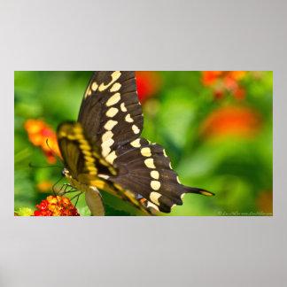 Mariposa gigante de Swallowtail en poster de los W