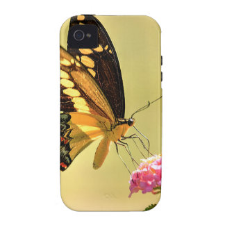 Mariposa gigante de Swallowtail iPhone 4 Carcasa