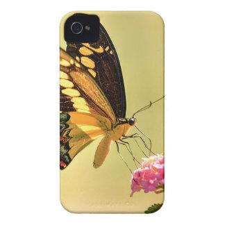 Mariposa gigante de Swallowtail iPhone 4 Case-Mate Funda
