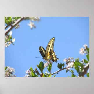 Mariposa gigante de Swallowtail Impresiones