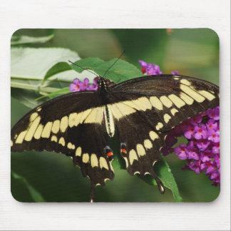 Mariposa gigante de Swallowtail Tapetes De Ratones