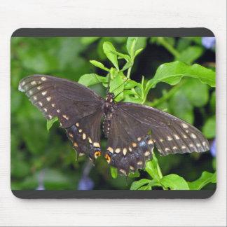Mariposa gigante de Swallowtail Alfombrillas De Raton