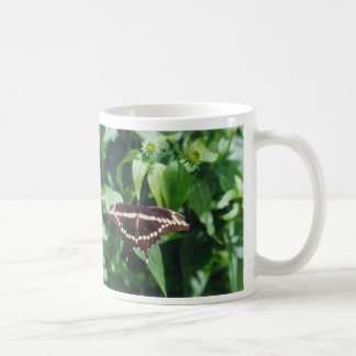 Mariposa gigante de Swallowtail Tazas