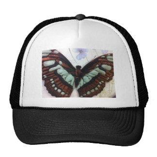 Mariposa Gorras