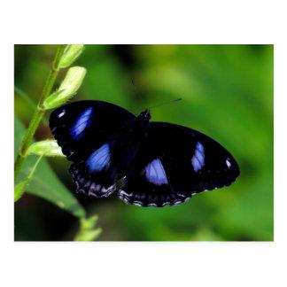 Mariposa gran Eggfly de la luna azul en Tailandia Postal