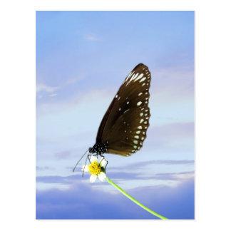 Mariposa gran Eggfly de la luna azul Postal