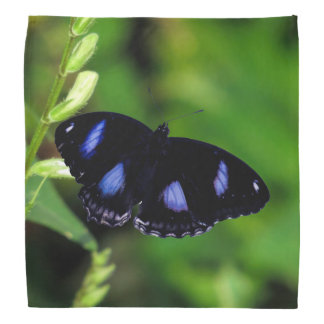 Mariposa gran Eggfly de la luna azul Bandanas