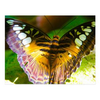 Mariposa grande tarjetas postales