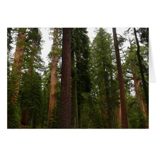 Mariposa Grove in Yosemite National Park Card