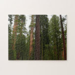 Mariposa Grove in Yosemite National Park Jigsaw Puzzle