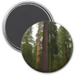 Mariposa Grove in Yosemite National Park Magnet