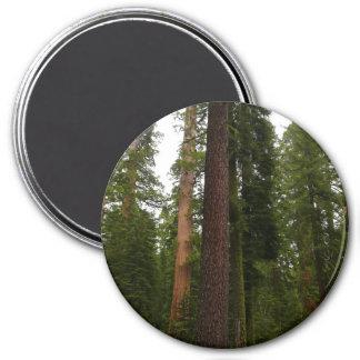 Mariposa Grove in Yosemite National Park Magnet