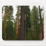 Mariposa Grove in Yosemite National Park Mouse Pad