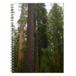 Mariposa Grove in Yosemite National Park Notebook