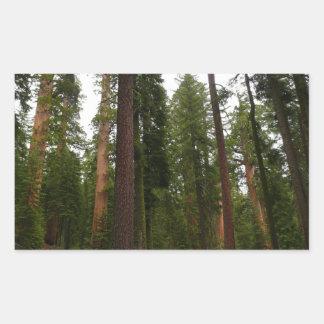 Mariposa Grove in Yosemite National Park Rectangular Sticker