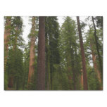 Mariposa Grove in Yosemite National Park Tissue Paper