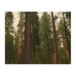 Mariposa Grove in Yosemite National Park Wood Wall Art