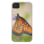 Mariposa hermosa de la reina Case-Mate iPhone 4 carcasa