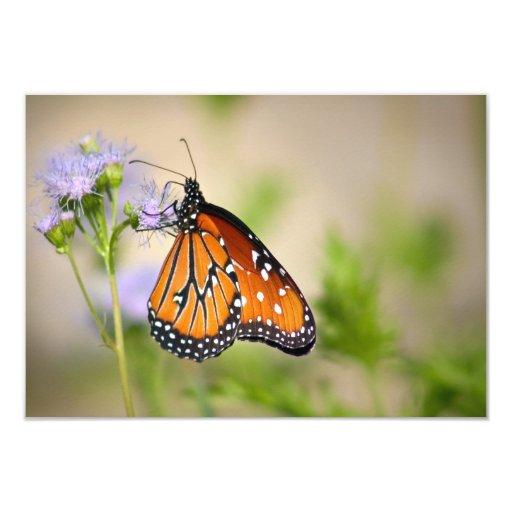 Mariposa hermosa de la reina invitación 8,9 x 12,7 cm