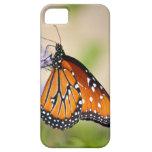 Mariposa hermosa de la reina iPhone 5 carcasas