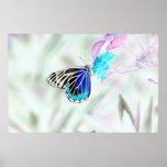 Mariposa hermosa en la flor - foto negativa posters