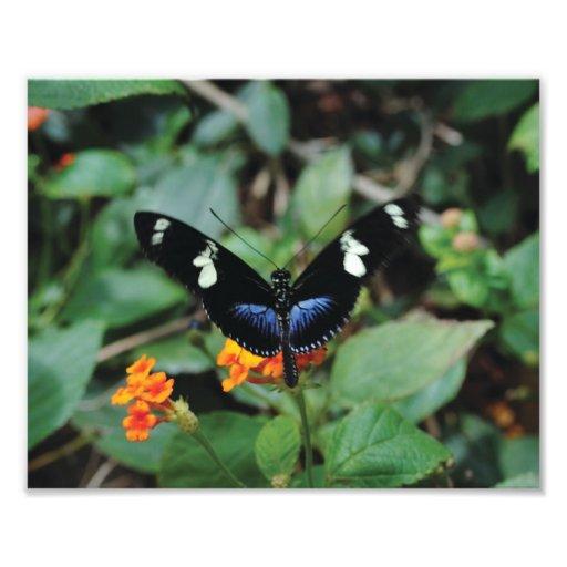 Mariposa hermosa fotografias