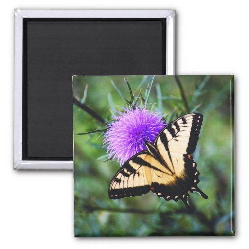 Mariposa hermosa iman de nevera