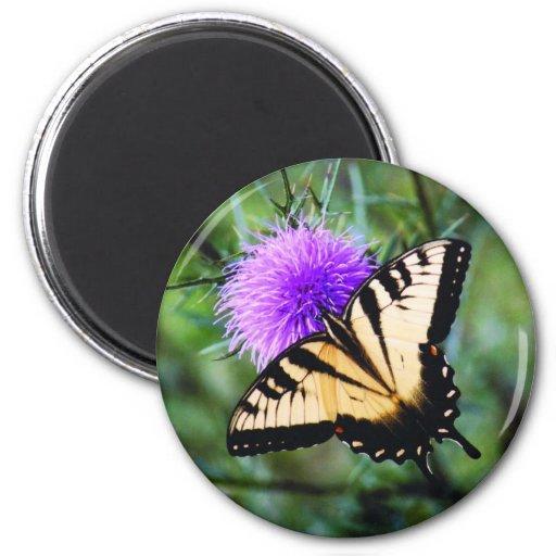 Mariposa hermosa imán redondo 5 cm