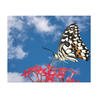 Mariposa hermosa lona envuelta para galerías