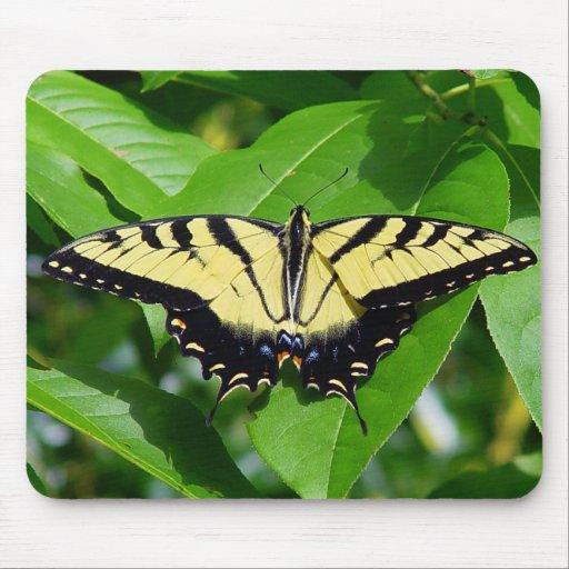 Mariposa hermosa Mousepad 5 de Swallowtail Tapete De Raton