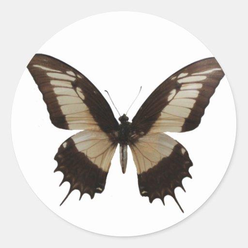 Mariposa hermosa pegatina redonda