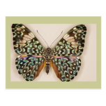 Mariposa hermosa postal
