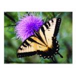 Mariposa hermosa tarjeta postal