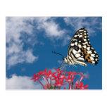 Mariposa hermosa tarjetas postales