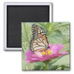Mariposa Imán Para Frigorifico