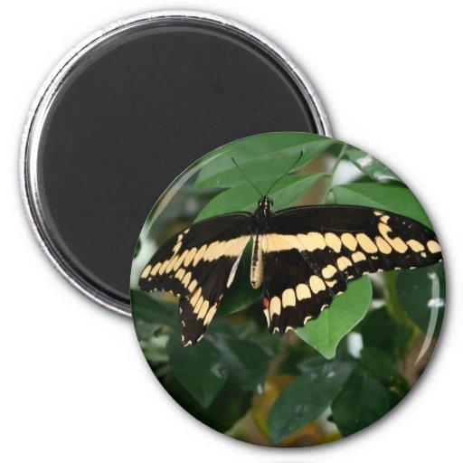 Mariposa Imán Redondo 5 Cm