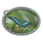 Mariposa imperial hebillas de cinturón ovales