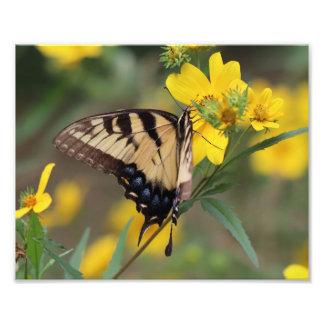 Mariposa, impresión de la foto cojinete