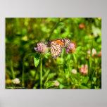 Mariposa Impresiones