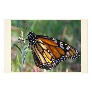 mariposa inmóvil papelería