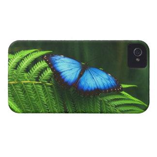 Mariposa iPhone 4 Fundas