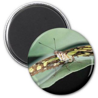 mariposa la Florida de la malaquita de las maripos Imán Redondo 5 Cm