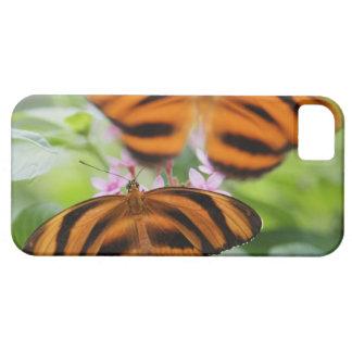 Mariposa larga 2 del ala de la cebra funda para iPhone SE/5/5s