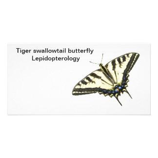 Mariposa Lepidopterology del swallowtail del tigre Tarjeta Personal