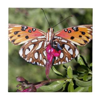 Mariposa manchada atontamiento hermoso de la cola tejas  cerámicas