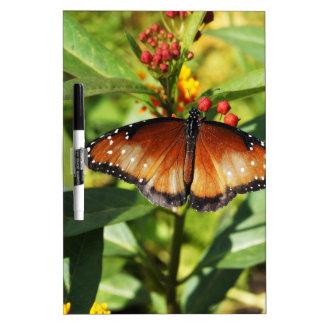 Mariposa manchada pizarras